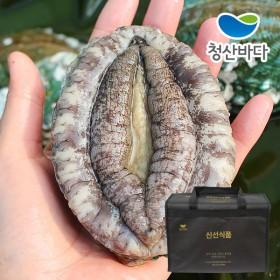 [선물세트][청산바다] 완도 활전복 특대 8-9미 2kg(약18마리) +고급가방