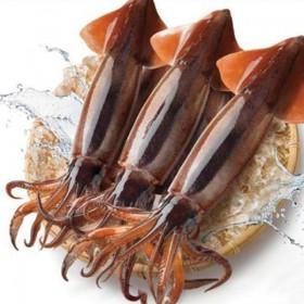 국내산 초콜릿 오징어 2미(마리당 210g내외)