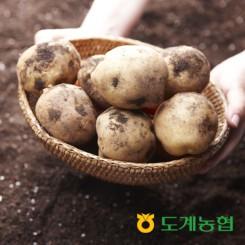 [농협]강원도 수미감자 중/대/특