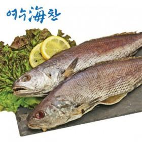 [여수수협] 손질 민어 700g(2~3미,250g이상/미)
