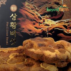 [경기6차산업인증] 상황버섯 300g