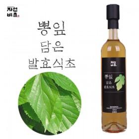자연비초/뽕잎 담은 발효식초 500ml 무설탕 전통발효